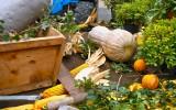 I frutti della terra. Mozzanica (BG), Novembre 2011