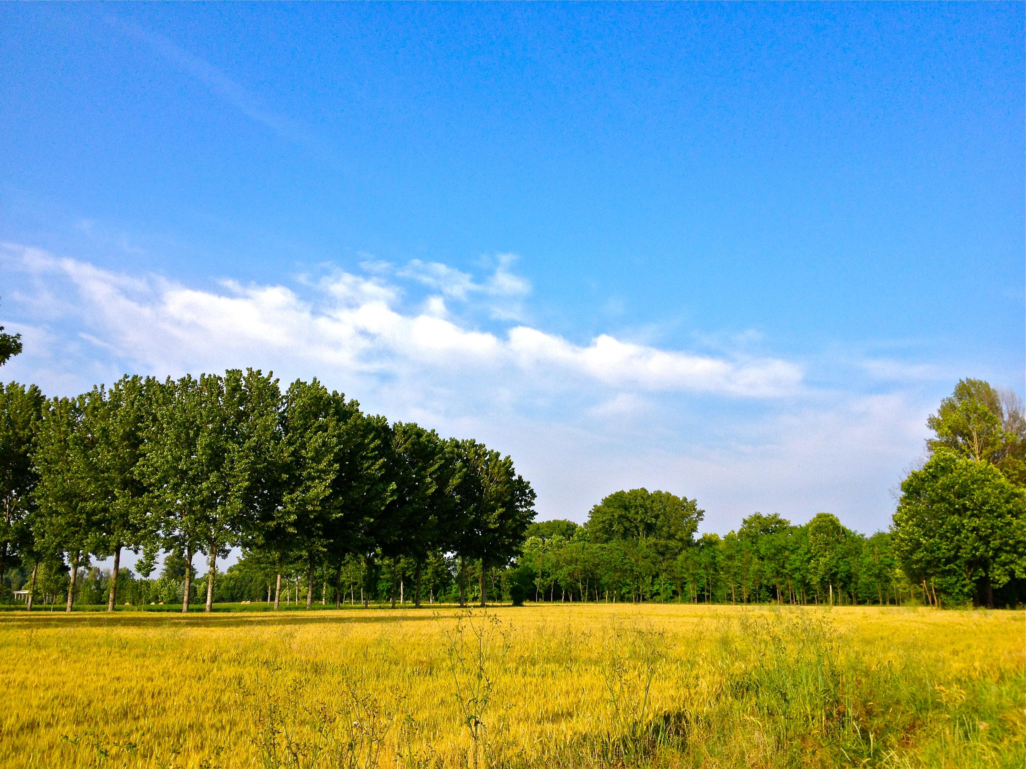 June, come back soon! Mozzanica (BG), giugno 2013